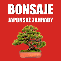Bonsai-dnes.cz/